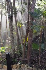 5 elements of grounding: meditation in the jungle